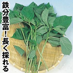 野菜たね 健康野菜 モロヘイヤ 1袋(5ml) / 種 タネ