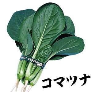 野菜たね 種 健康野菜 丸葉小松菜 1袋(10ml) / 野菜の種 コマツナ 国華園 ytsc133