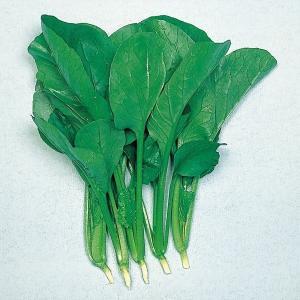 野菜たね 種 健康野菜 黒葉小松菜 1袋(10ml) / 野菜の種 コマツナ 国華園 ytsc133