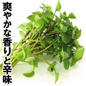 野菜たね ハーブ クレソン 1袋(1ml) / 種 タネ kokkaen
