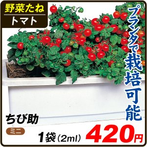 野菜たね トマト ちび助 1袋(2ml) / 種 タネ kokkaen