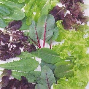 野菜たね サラダシリーズ レタスいろいろミックス 1袋(20ml) / 種 タネ kokkaen