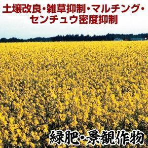 野菜たね 緑肥・景観作物 緑肥用からしな 1袋(0.5kg)