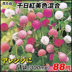 花たね 千日紅美色混合 1袋(300mg)|kokkaen