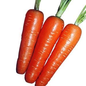 種 野菜たね ニンジン 時なし五寸人参 1袋(10ml入)/タネ たね 人参 にんじん