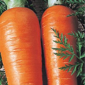 野菜たね 種 ニンジン 新黒田五寸人参 1袋(10ml) / 人参 キャロット 野菜の種 国華園 kokkaen