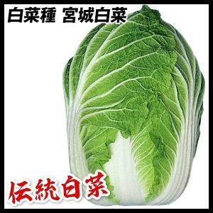 野菜たね 種 ハクサイ 宮城白菜 1袋(3ml) / 白菜 野菜の種 国華園 kokkaen