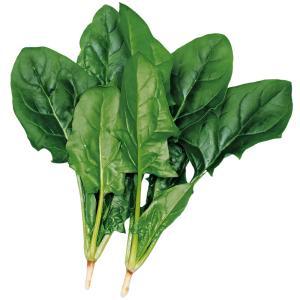 種 野菜たね ほうれん草 早生ほうれん草 1袋(40ml入)/タネ たね ホウレンソウ ほうれんそう 法蓮草 ホウレン草