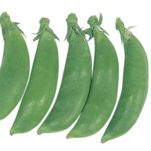 種 野菜たね マメ 早生スナップ豌豆 1袋(30ml入)/タネ たね まめ 豆 豌豆 えんどう kokkaen