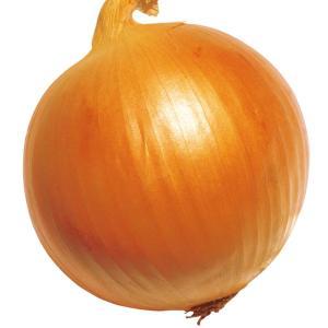 野菜たね タマネギ 旨玉グルメ 1袋(5ml入)|kokkaen