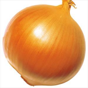 種 野菜たね タマネギ F1超極早生玉葱 1袋(5ml入)/タネ たね たまねぎ 玉ねぎ 玉葱 玉ネギ