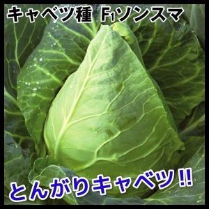 種 野菜たね キャベツ F1ソンスマ 1袋(50粒入)/タネ たね きゃべつ 葉菜