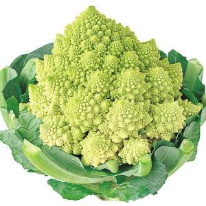 種 野菜たね カリフラワー ロマネスコ 花野菜 F1サンゴ礁花耶菜 1袋(1ml入)  カリブロ/タネ たね かりふらわー kokkaen