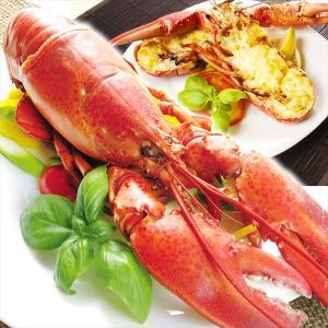 ロブスター カナダ産 ロブスター(ボイル)2尾 【おまけ付き】 冷凍 食品|kokkaen