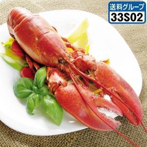 ロブスター カナダ産 ロブスター(ボイル)3尾 【おまけ付き】 冷凍 食品|kokkaen