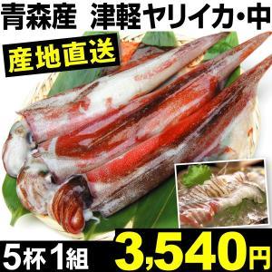 魚介 青森産 津軽ヤリイカ・中サイズ 5杯1組 冷蔵 食品|kokkaen