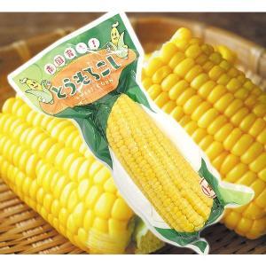トウモロコシ 真空パック とうもろこし 10本 食品◆|kokkaen
