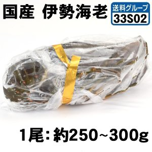 国産 伊勢海老 1尾 冷凍便 食品◎ グルメ|kokkaen