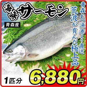 サーモン 海峡サーモン 1尾分(約2.5kg)青森産 姿 鮭 むつ漁港より直送 鮮魚 養殖 刺身 冷蔵便 国華園|kokkaen