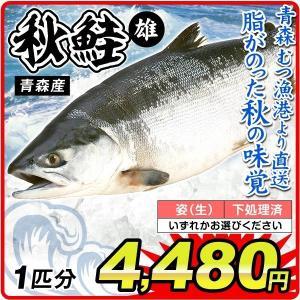 鮭 秋鮭・オス 1尾分(約3.5kg)青森産 さけ(姿・下処理のいずれかお選びください)むつ漁港より直送 鮮魚 天然 国華園|kokkaen