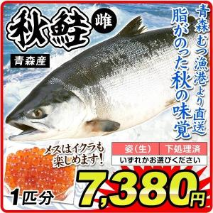 鮭 秋鮭・メス 1尾分(約3.5kg)青森産 さけ イクラ(姿・下処理のいずれかお選びください)むつ漁港より直送 鮮魚 天然 国華園|kokkaen