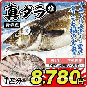 鱈 真ダラ・オス 1尾分(約4kg)青森産 鱈 雄 真鱈 白子(姿・下処理のいずれかお選びください)むつ漁港より直送 鮮魚 天然 国華園|kokkaen