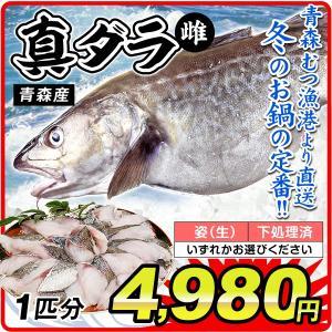 鱈 真ダラ・メス 1尾分(約4kg)青森産 鱈 雌 真鱈(姿・下処理のいずれかお選びください)むつ漁港より直送 鮮魚 天然 国華園|kokkaen