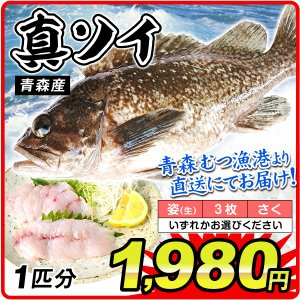 真ソイ 1尾分 青森産 鮮魚 「姿」・「3枚おろし」・「さく」からお選びください 刺身 天然 そい 国華園|kokkaen