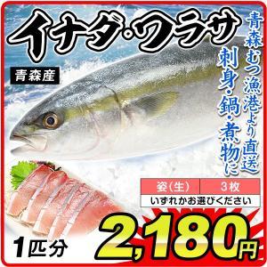 イナダ ワラサ 1尾分 青森産  鮮魚 「姿」・「3枚おろし」からお選びください 刺身 天然 国華園|kokkaen