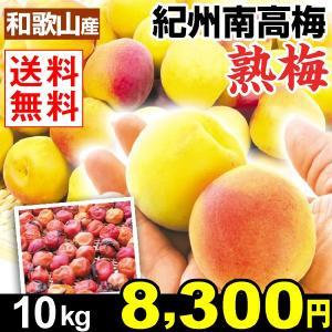 生梅 和歌山産 紀州南高梅・熟梅 10kg1組 梅干し 送料無料 冷蔵便 kokkaen