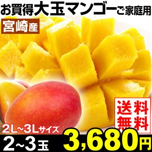 マンゴー お買得 宮崎産 大玉マンゴーご家庭用 2〜3玉 1...