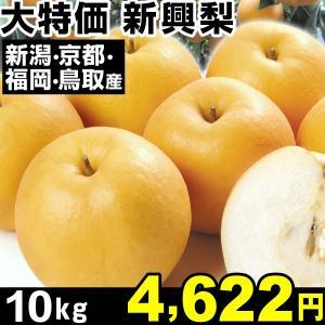 梨 大特価 新興梨 10kg 1箱|kokkaen