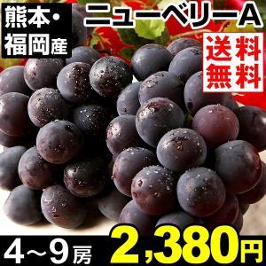 ぶどう 【超買得】福岡・熊本産 種無しニューベリーA 約2k...