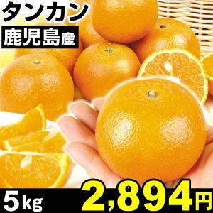 みかん 鹿児島産 タンカン 5kg1箱 みかん 食品|kokkaen