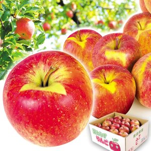 リンゴ 青森産 大特価 葉とらずふじ 10kg1箱 送料無料 特別版|kokkaen