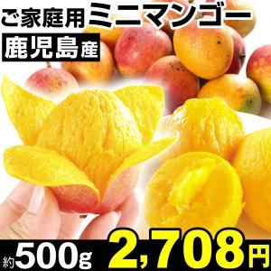 マンゴー 鹿児島産 ご家庭用 ミニマンゴー 約500g1組 食品|kokkaen