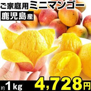 マンゴー 鹿児島産 ご家庭用 ミニマンゴー 約1kg1組 食品|kokkaen