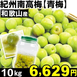 生梅 和歌山産 紀州南高梅・青梅 10kg1箱 うめ 冷蔵 食品 kokkaen