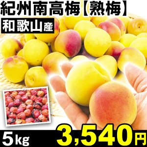 生梅 和歌山産 紀州南高梅・熟梅 5kg1箱 うめ 冷蔵 食品 kokkaen