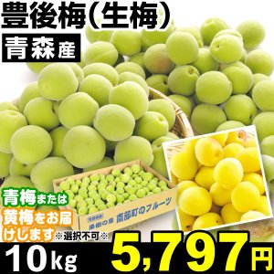 生梅 青森産 生梅・豊後梅 10kg1組 うめ 冷蔵 食品|kokkaen