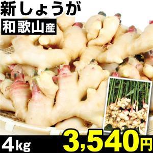 生姜 和歌山産 新しょうが 4kg1組 冷蔵 食品|kokkaen