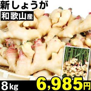 生姜 和歌山産 新しょうが 8kg1組 冷蔵 食品|kokkaen