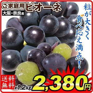 ぶどう 岡山産 ニュー ピオーネ 2房 1kg以上 1箱 送料無料 種なしピオーネ  甘くて大粒 巨峰を超える高級ぶどう|kokkaen
