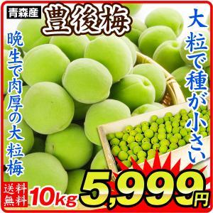 梅 青森産 生梅 【豊後梅】 5kg1組 送料無料 生梅 冷蔵便 食品|kokkaen