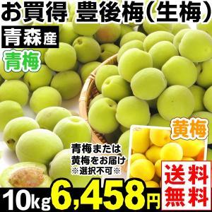 梅 青森産 生梅 【豊後梅】 10kg1組 送料無料 生梅 冷蔵便 食品|kokkaen