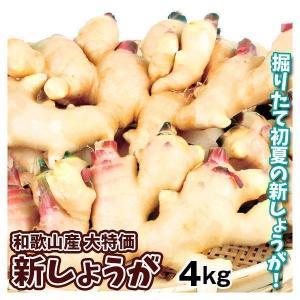 しょうが 和歌山産 新しょうが 4kg1組 送料無料 生姜 野菜 冷蔵便 食品 kokkaen
