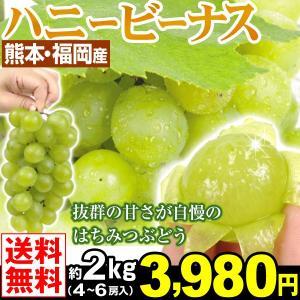 ぶどう 熊本・福岡産 ハニービーナス 約2kg1箱 4〜6房 送料無料 冷蔵便 白ブドウ はちみつぶどう kokkaen