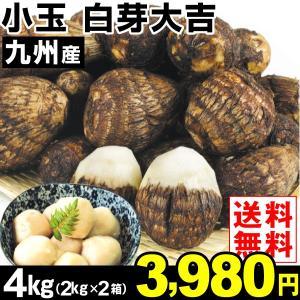サトイモ 九州産 小玉 白芽大吉 4kg1組 送料無料 野菜 食品|kokkaen