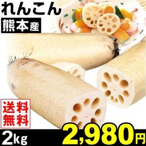 レンコン 熊本産 れんこん 2kg1組 送料無料 ご家庭用 野菜 食品|kokkaen