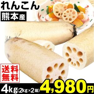 レンコン 熊本産 れんこん 4kg1組 送料無料 ご家庭用 野菜 食品|kokkaen